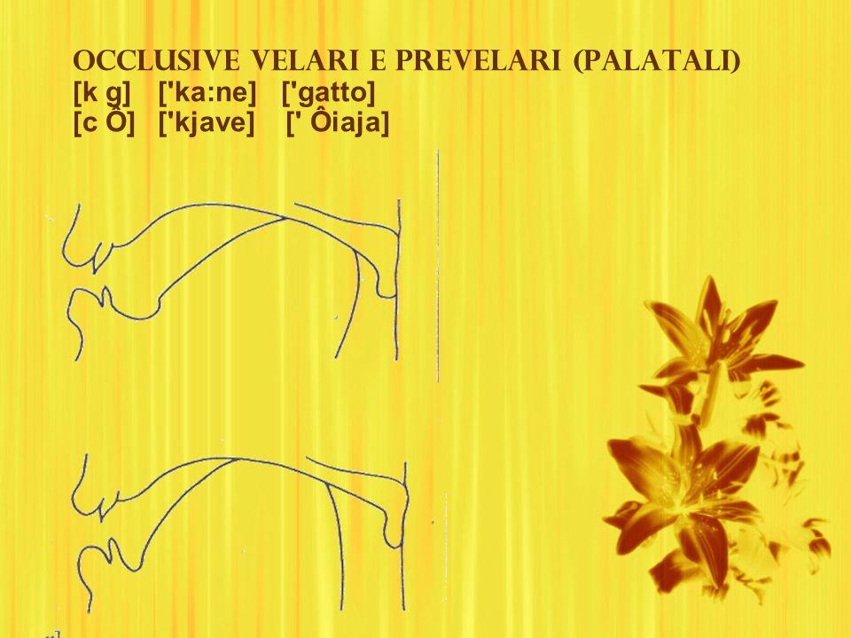 Occlusive velari e prevelari (palatali) [k g]. [ ka:ne] [ gatto] [c Ô]